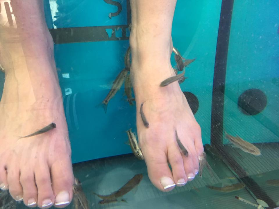 Foot doctor blog podiatrist in huntington manhasset for Fish pedicure nyc